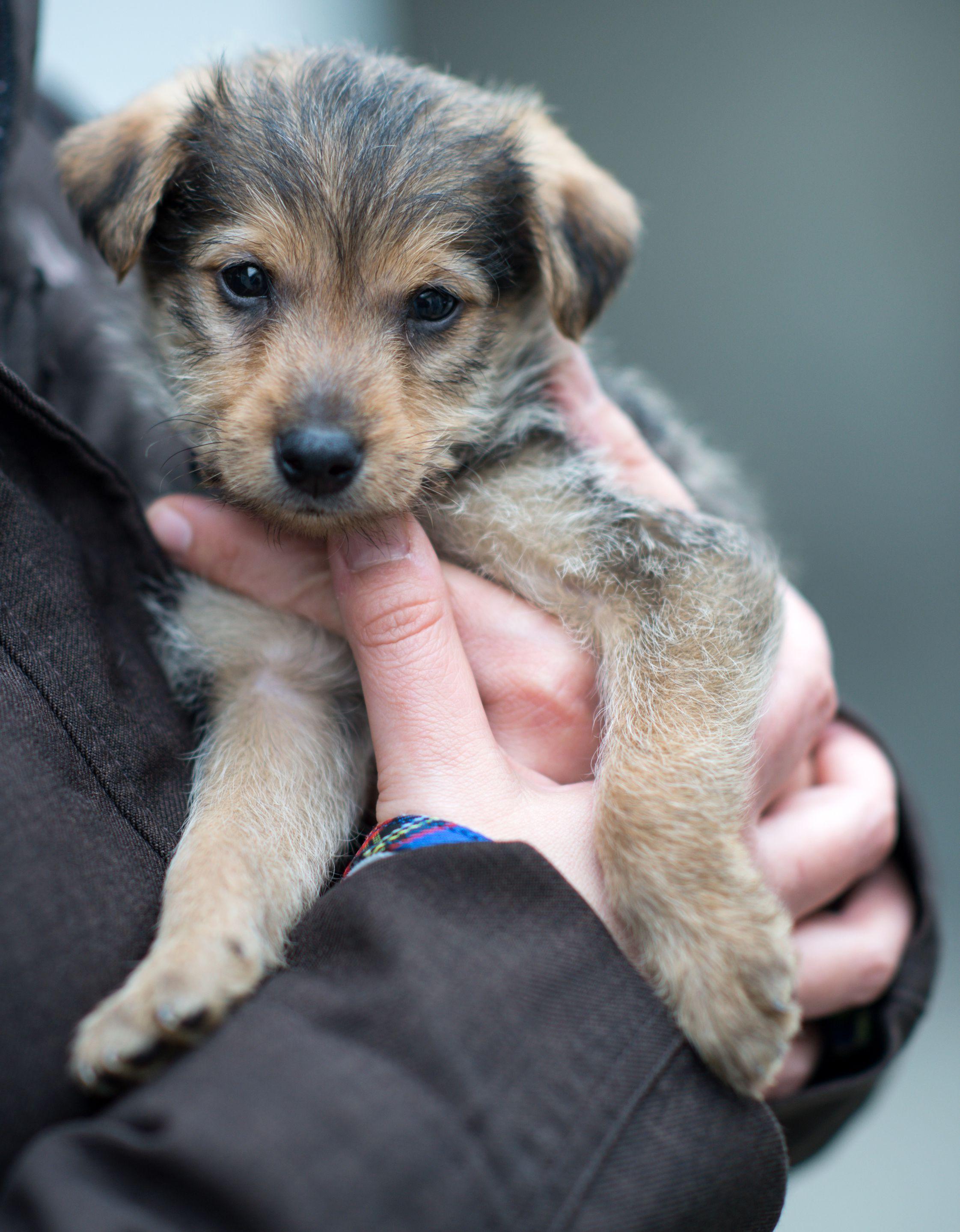Mischlingswelpen Im Tierheim Warten Viele Kleine Hunde Auf Ein Zuhause