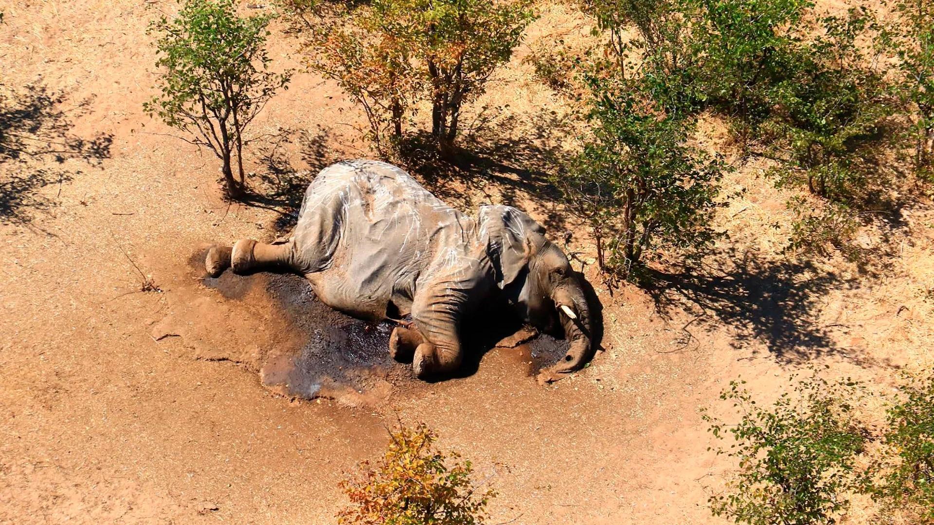 Elefantensterben