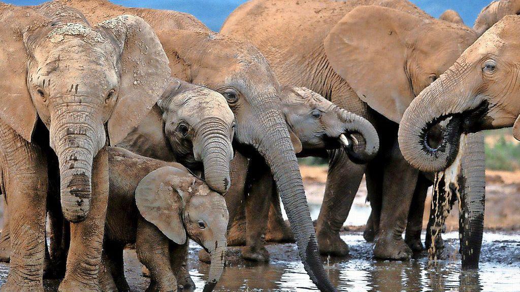 S-dafrika-Elefanten-trampeln-mutma-lichen-Wilderer-tot