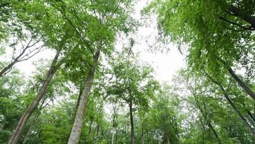 Baum gedicht hochzeit Bäume